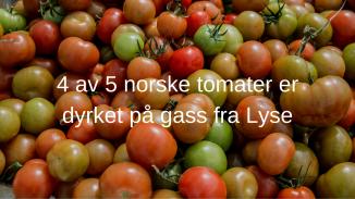 4 av 5 norske tomater er dyrket på gass fra Lyse.